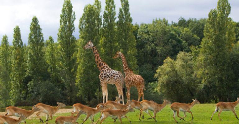Zoo et parc de Thoiry & concert de Yannick Noah