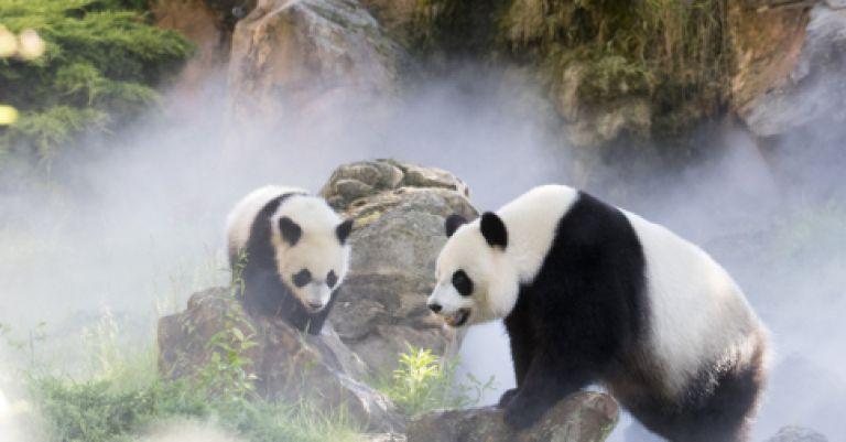 Week-end zoo de Beauval